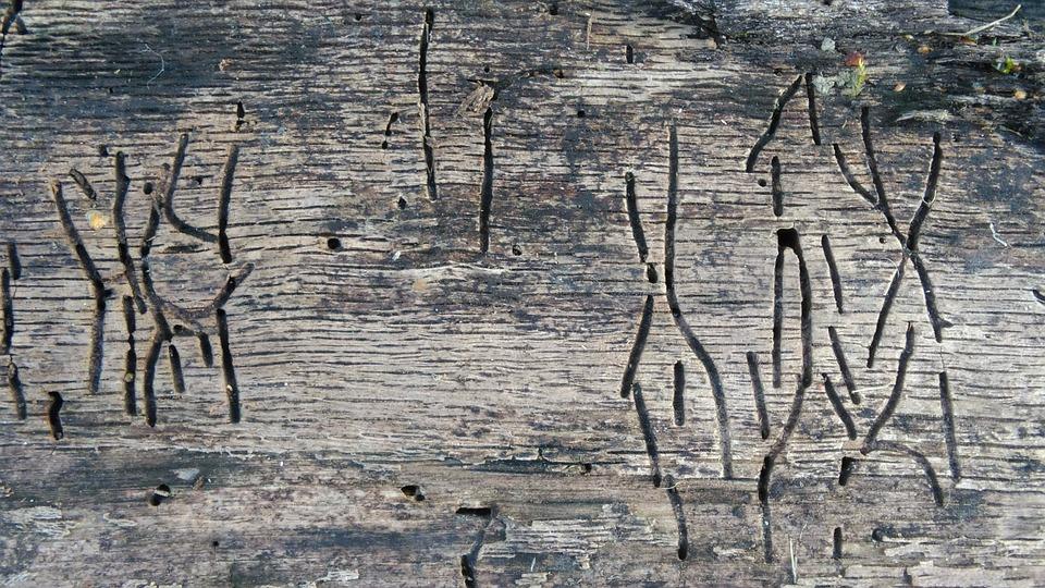 houtwormbestrijding best